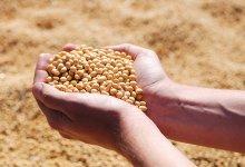 Agronegócio: quanto de tecnologia há em um grão de soja?
