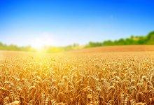 Agritech Show: toda a tecnologia para o campo em um só lugar