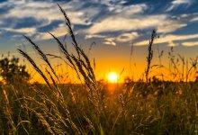 Energia solar leva excelência ao agronegócio