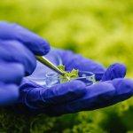 Tecnologia no agronegócio é fator-chave para o campo