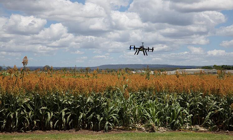 Agribusiness precisa de tecnologia e sustentabilidade