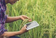 Agribusiness: tecnologia e sustentabilidade