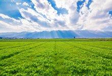 Tecnologia agrícola é fundamental para o Brasil